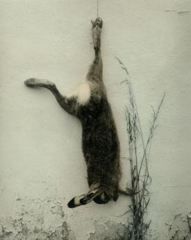 Non è un gatto, è un coniglio ma soprattutto il simbolo della mia lotta antianimalista.